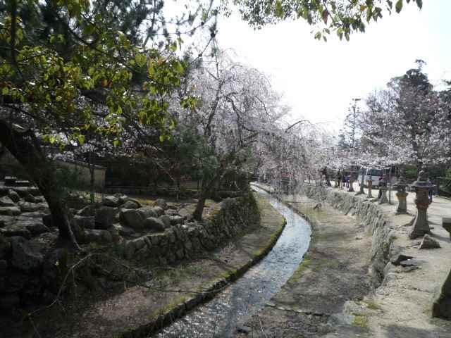 20100411-02.jpg